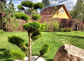 Рулонный газон и посадка растений